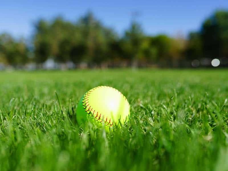 Softball lying in grass.