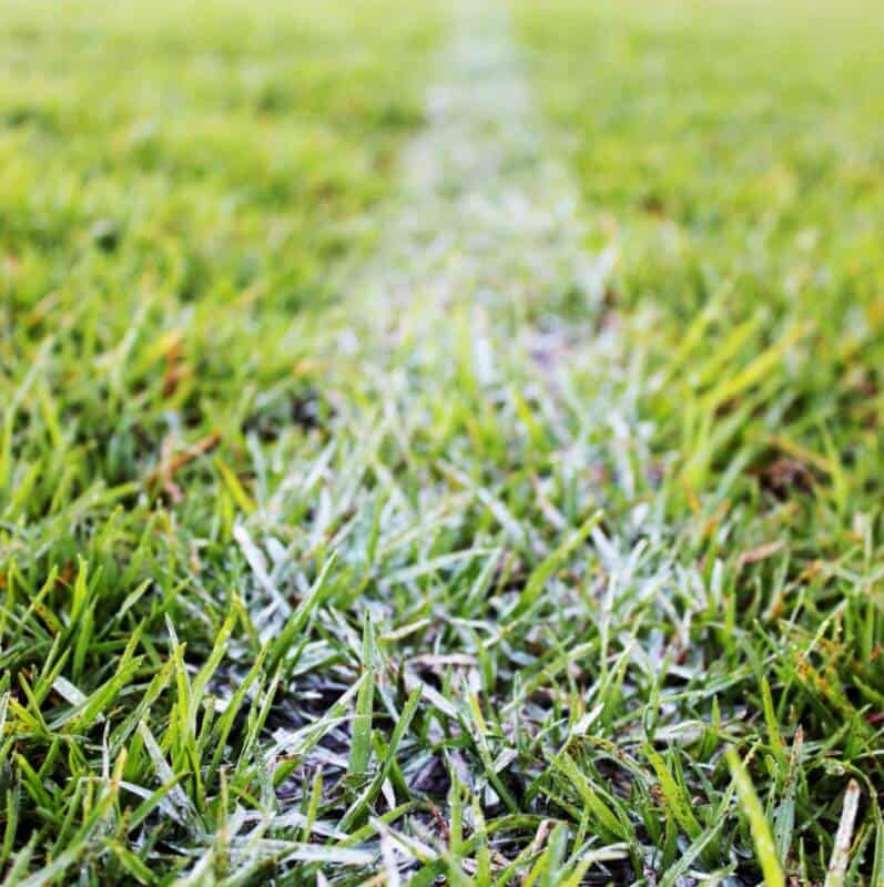 A painted line on a football field.